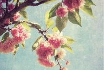 Flowers / by Mi Pe