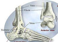 láb anatómiája