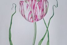 Tulips  , watercolor painting / Tulip , Flowers , Watercolor painting ,