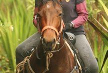 Horse Riding to Machu Picchu / Take a trip to Machu Picchu, lodge to lodge and on beautiful quarter horses.