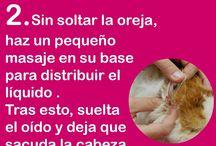 Orejas De Gato limpiar
