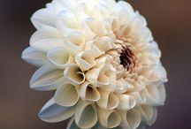 Flowers / by ℳiền Tây ℳUA ♥ レ O √ 乇