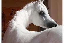 Equines / by J. G. Oliver