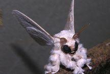 Beautiful moths