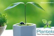 Plantekno Plant and Agriculture Technology Co. Ltd.