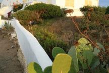 Verd de Menorca