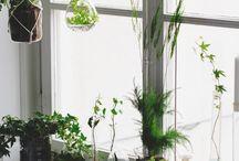 ✷ plants + flowers
