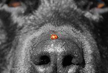 rottweiler lieveheerstbeestje