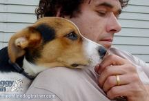 Calm & Gentle Dog Training