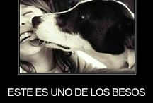 Frases para Perros :)
