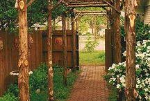 My garden one day