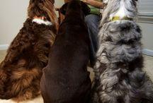 Dogs Rule / by Sarah Pfeiler
