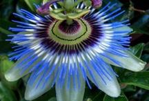 I absolutely Love Flowers!!!  / by Rita Kaplin