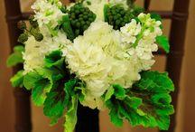 My Flowers / by MyFavoriteFlowers.com Olga Goddard