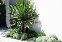Jardines tropicales contemporaneos
