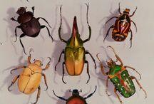 scarab-priceless®