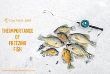 The Importance of Freezing Fish