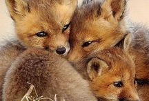 Foxes <3 / by Cassie Dugger