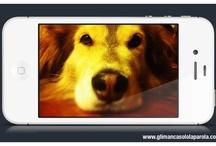 glimancasololaparola.com / axel è un cane che ha imparato a inviare SMS...