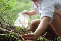 Pilze / Tipps zum richtigen Umgang mit Pilzen, Abbildungen der verbreitetsten Pilze mit Wahnhinweisen auf Giftigkeit und Verwechslungsgefahr beim Pilze sammeln.