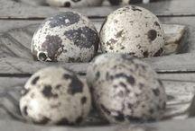 Eggs & stones