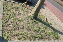 Boomspiegel adopteren / Hoe adopteer je een boomspiegel. Maak van een kale zandplek onder de boom een biodiverse plek. Doe dit samen dan geniet je er dubbel van.