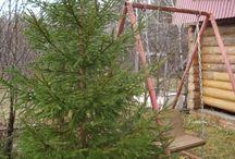 Дачно-строительный сезон 2013 закрыт / Спасибо природе за солнечный день в начале ноября. Удалось закрыть дачно-строительных сезон 2013