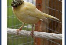 So I like weird birds...
