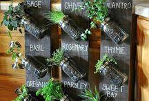 indoor plant displays