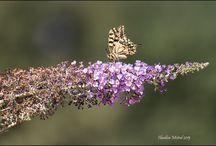 Papillons / Quelques photos de papillons du sud de la France