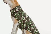 roupas cachorro
