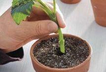 Gartenarbeit pro monat