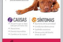 tips para cuidar a tu perrito / ayuda a tu perro