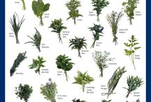 Cooking tips / Herb identification chart