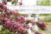 The Gardens in May / Flowering Crabapple, lilacs and all the popping buds....  the beautiful-ness of Spring!   Enjoy a handful of images from the grounds at The Gardens during the month of May! -- #SpringFlowers #Crabapple #Lilacs   #Pergola   #OutdoorWeddings   #Minnesota