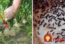Proti mravcom