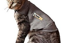 Cat Health