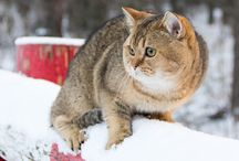 Cats - Health/Training