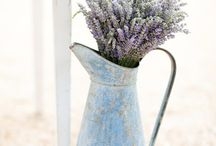 Lavender - my love!