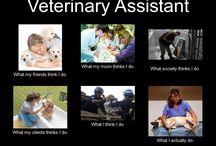 Veterinary / by Kristyn Wintz