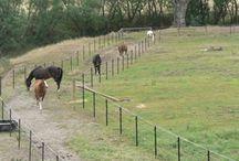 Horses uitloop