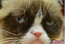 Grumpy cat❤️