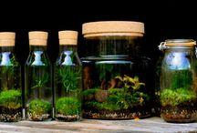 création végétale / composition de plante en bocal, jardin sous verre