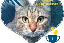 Animalsburg.ru Анималсбург / На Благо, Добро и Пользу! Помощь животным: кошки и собаки ищут дом. For the benefit, Welcome and enjoy! Help animals: cats and dogs looking for a home.