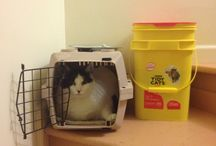 Reality Cats / Documenting the strange cat occurrences that occur in my home