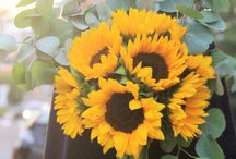 SUNFLOWERS + CALIFORNIA: Sunshine + Happiness Bunch / This board is dedicated to the gorgeous California Sunflowers we grow right here at Kendall Farms.