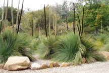 Natives / Native plants