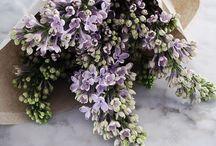 Cut flowers/bouquets