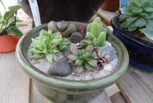 Imagine Succulents / Check out these great succulents and see what you can create with them. Easiest little plants to create amazing things.