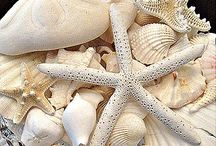 I ♥ Beach Treasures / All things you can find at the beach